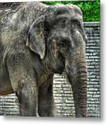 Asian Elephant  0a Metal Print