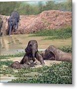 Asian Elephants - In Support Of Boon Lott's Elephant Sanctuary Metal Print
