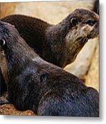 Asian Otters Metal Print