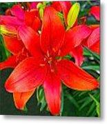 Asiatic Hybrid Lily Metal Print