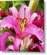 Asiatic Lily Metal Print