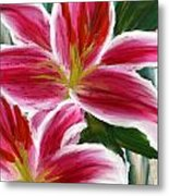 Asiatic Lily- Asiatic Lily Paintings- Pink Paintings Metal Print