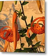 Asiatic Tiger Lily Metal Print
