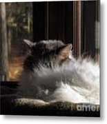 Asleep Metal Print