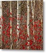 Aspen And Berries Metal Print