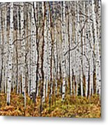 Aspen And Ferns Metal Print