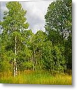 Aspen And Others Metal Print