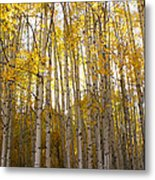 Aspen Autumn Metal Print