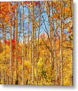 Aspen Fall Foliage Portrait Red Gold And Yellow  Metal Print