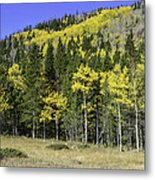 Aspen Foliage Metal Print by Tom Wilbert