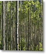 Aspen Grove Along Independence Pass II 2009 Metal Print