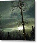 Aspen In Moonlight Metal Print