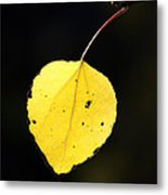 Aspen Leaf  In Fall Metal Print