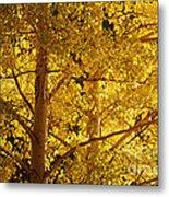 Aspen Leaves Textured Metal Print