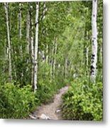 Aspen Path Metal Print