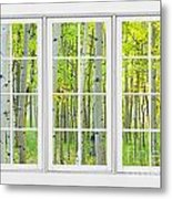 Aspen Tree Forest Autumn Time White Window View  Metal Print by James BO  Insogna