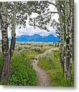 Aspen Trees On Trail To Jackson Lake At Willow Flats Overlook In Grand Teton National Park-wyoming  Metal Print