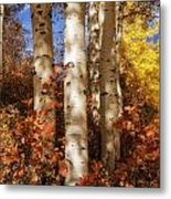 Aspen Trunks And Red Metal Print