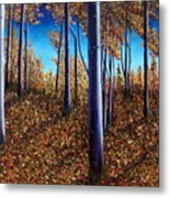 Aspens In Autumn II Metal Print