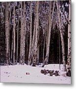 Aspens In Snow Metal Print