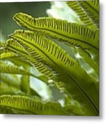 Asplenium Scolopendrium Metal Print by Science Photo Library