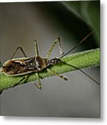 Assassin Bug Metal Print