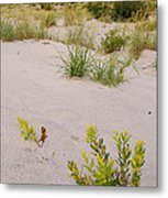 Assateague Dunes 2 Metal Print