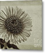 Aster With Textures Metal Print