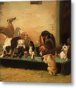 At A Dogs' Home Metal Print