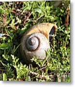 At A Snail's Pace Metal Print