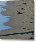 At Emery Point Metal Print