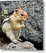 At Home In The Lava Beds Metal Print