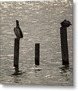 Seadrift Texas Birds At Rest Metal Print