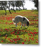At Ruchama Forest Israel 1 Metal Print