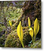 At The Bottom Of The Forest Metal Print