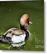 At The Duck Pond Metal Print