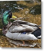 At The Duck Pond V5 Metal Print