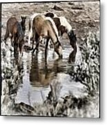 At The Watering Hole 1 Metal Print