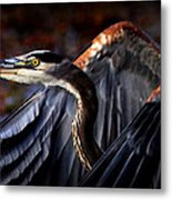 At Waters Edge - Great Blue Metal Print