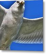 At Your Disposal The Waiting Gull Metal Print