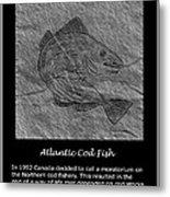 Atlantic Cod Fish Sketch Metal Print