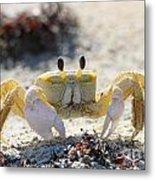 Atlantic Ghost Crab 2760 Metal Print