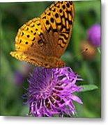 Atlantis Fritillary Butterfly Metal Print