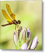 Atop The Hostas Metal Print