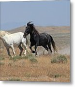 Attention Getter Metal Print