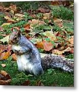 Attentive Squirrel Metal Print