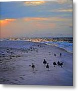 August Beach Morning With The Sea Gulls Metal Print