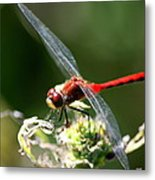 August Dragonfly  Metal Print