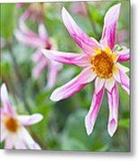 August Flower Gardens Metal Print
