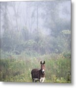 August Morning - Donkey In The Field. Metal Print by Gary Heller